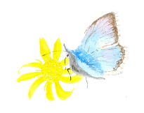 Painting of Chalkhill Blue butterfly by Janette Petts