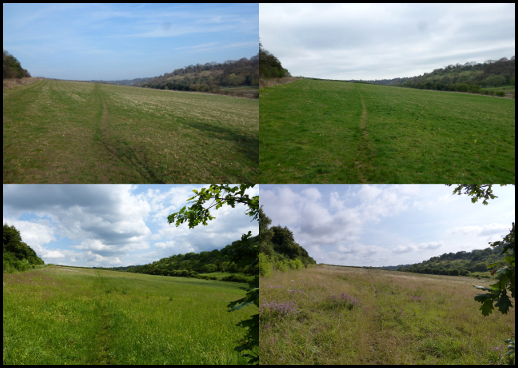 Collage of views of Holtspur Bottom Lower Meadow throughout the seasons